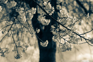 © 2015 LotsaSmiles Photography