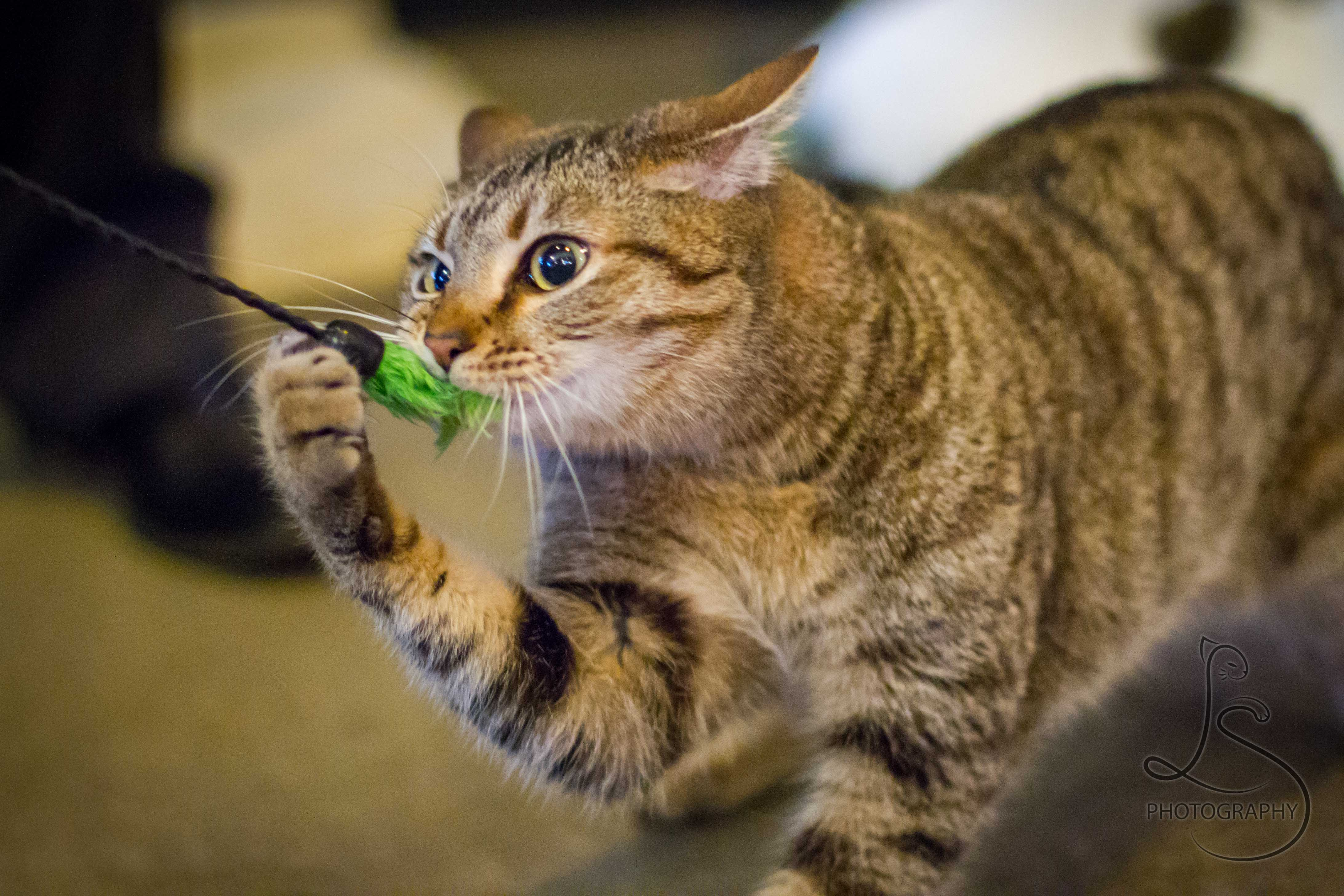 © LotsaSmiles Photography 2012