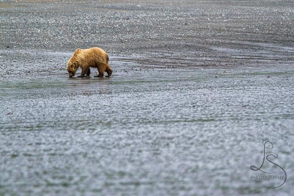 © LotsaSmiles Photography 2017