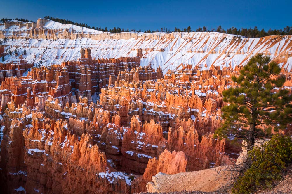 Snowy hoodoos in Bryce Canyon at sunrise   LotsaSmiles Photography