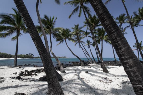 Palm trees on a Hawaiian beach | LotsaSmiles Photography