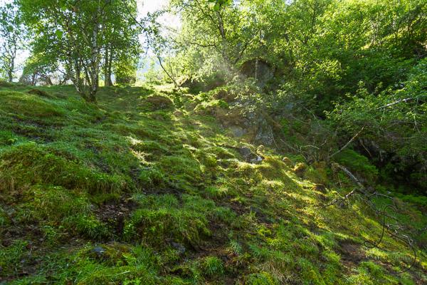 Sunbeam shining through the trees onto a mossy hillside   LotsaSmiles Photography