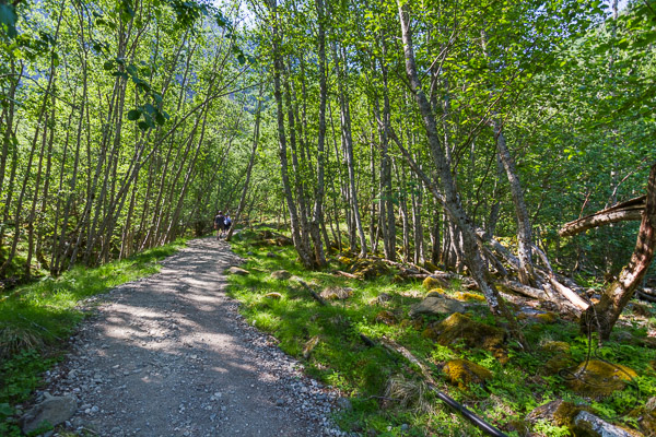 Gravel trail through sunny trees   LotsaSmiles Photography