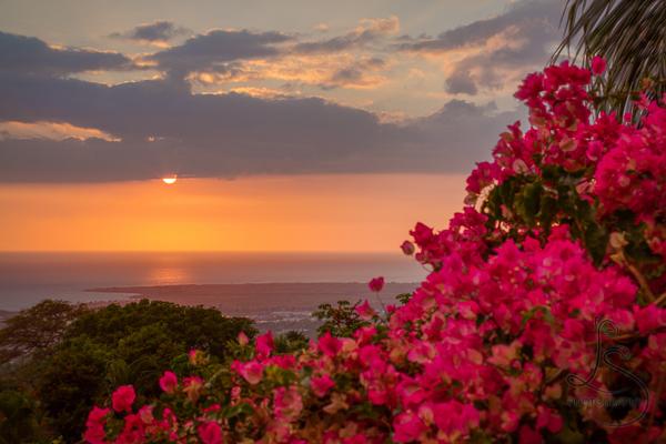 Hawaiian sunset behind tropical flowers   LotsaSmiles Photography